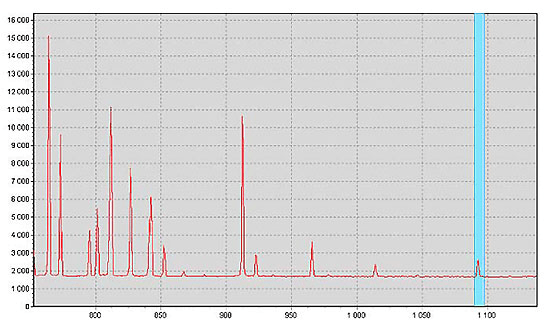 Argon lamp spectrum recorded with the S41 spectrometer